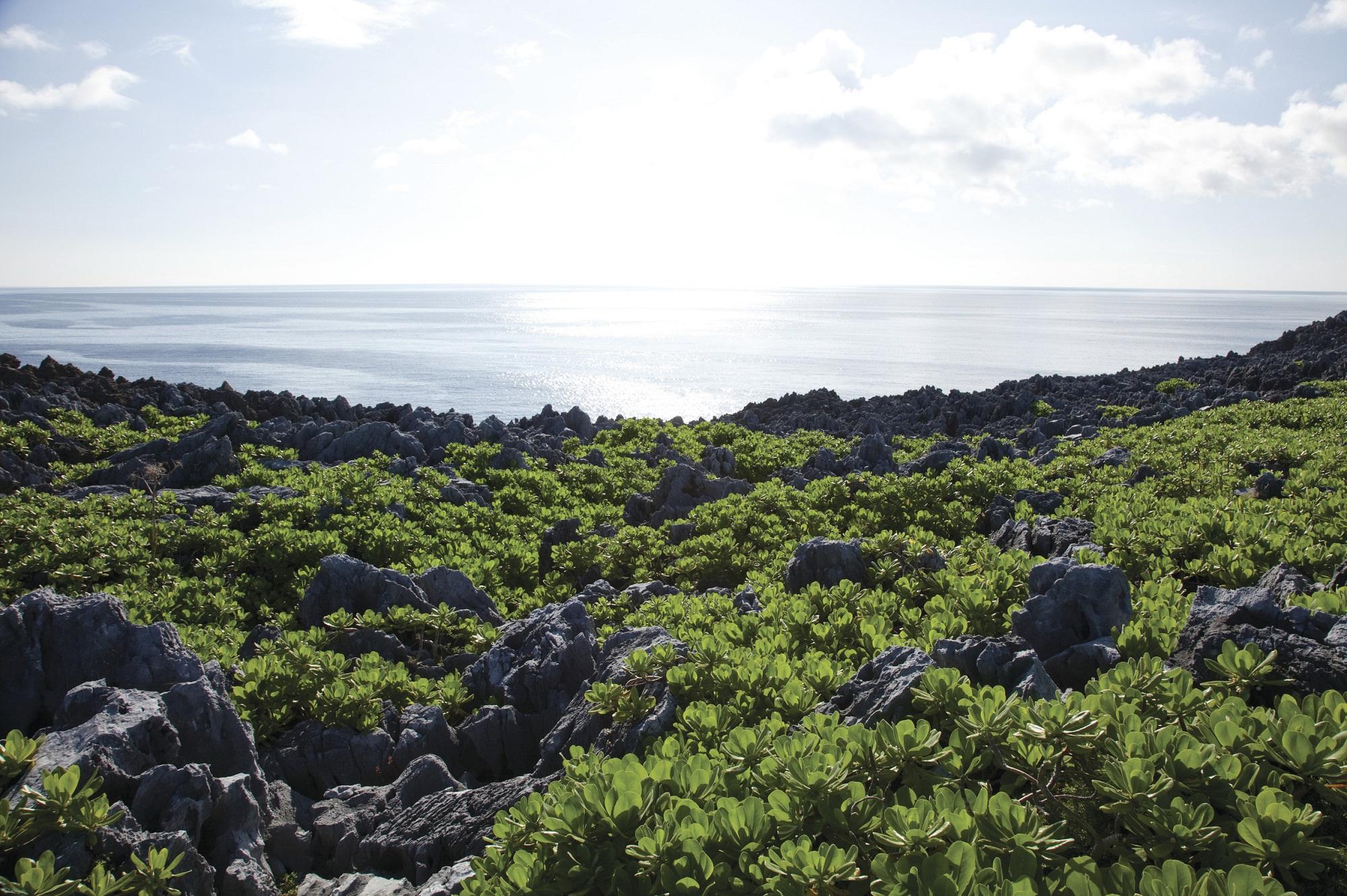 沖縄の大自然に囲まれながら日常を送れる・本島北部「国頭村(くにがみそん)」移住取組として空き家活用住宅や移住体験住宅も整備