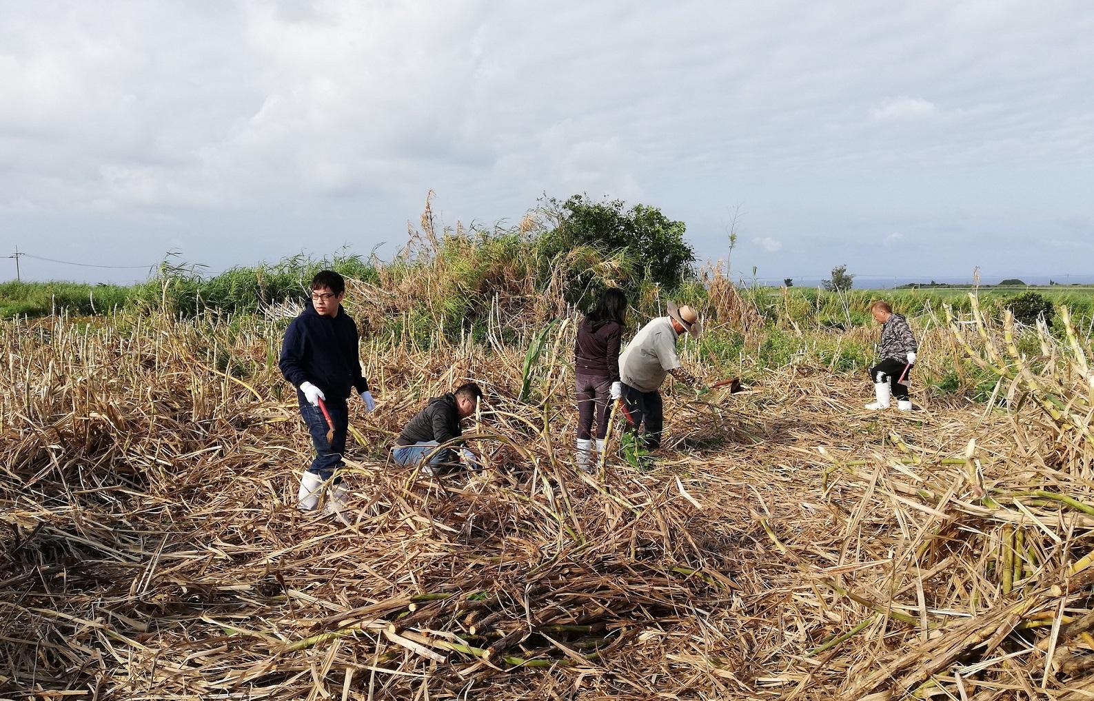 [農業]令和2年度第1回沖縄県新規就農相談会の開催について